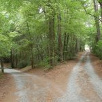 The many roads that lead to living minimal and simple